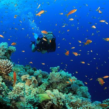 Discover Scuba Diving for Beginners with 2 dives at Amazing (Thailand) Locations