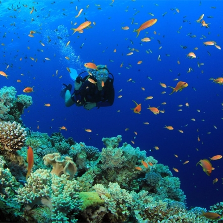 discover scuba diving tour samui
